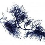 buoyancy - seweed sketch by Guna Green